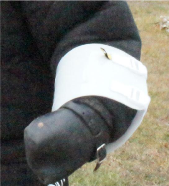 Protection dog hand protector