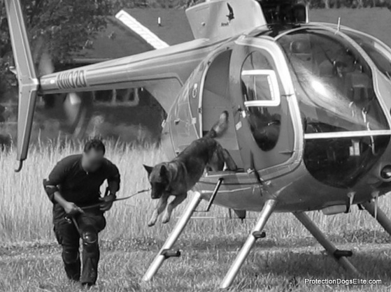 Canine helicopter training