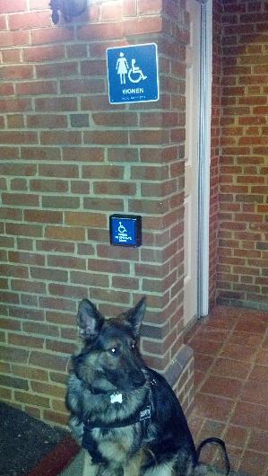Personal protection dog guarding bathroom.