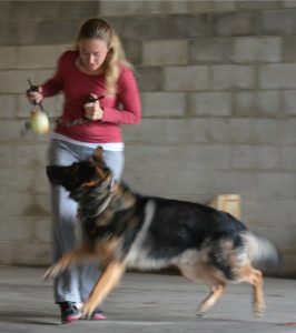 Here's Nicole training ball crazy Rubix in obedience and protection skills