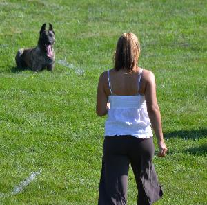 protection dog and single woman